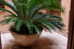 Palmera-Patio-scaled